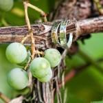 renault-winery-wedding